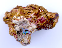 1 Rough opalised fossil wood specimen OWS162