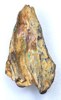 1 Rough opalised fossil wood specimen